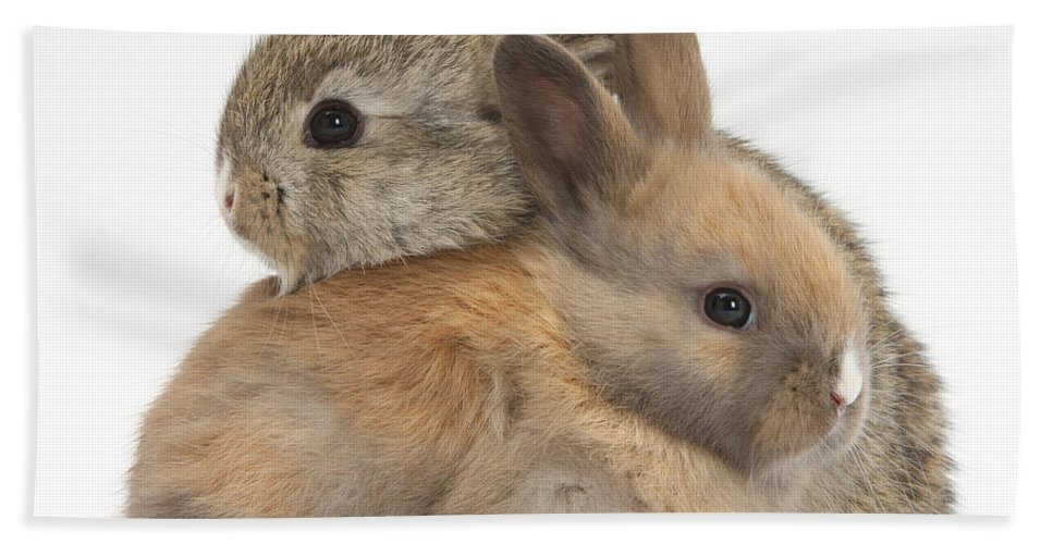 Animal Beach Towel featuring the photograph Baby Rabbits by Mark Taylor