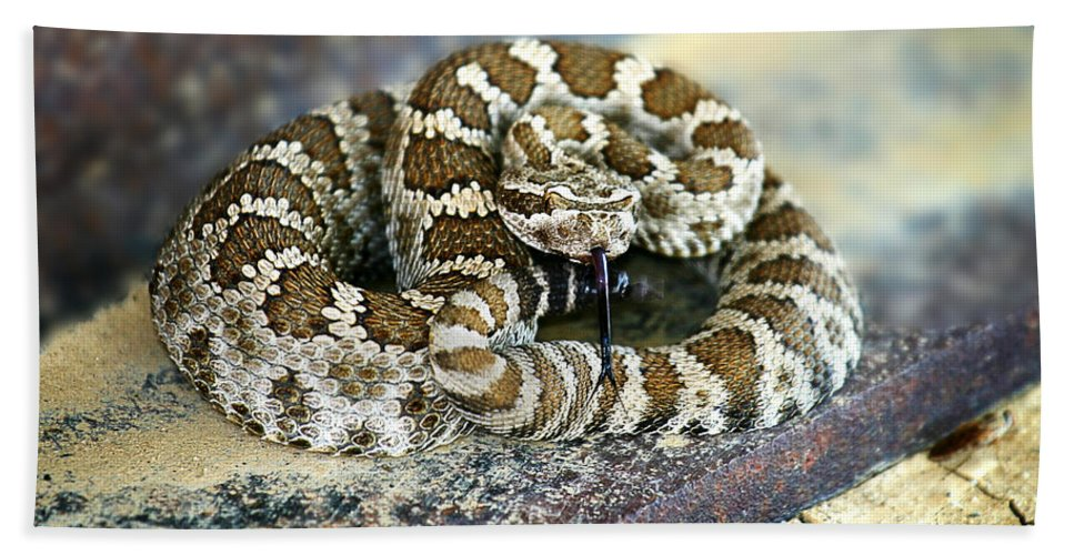Rattle Snake Beach Towel featuring the photograph Baby Rattle by Anthony Jones