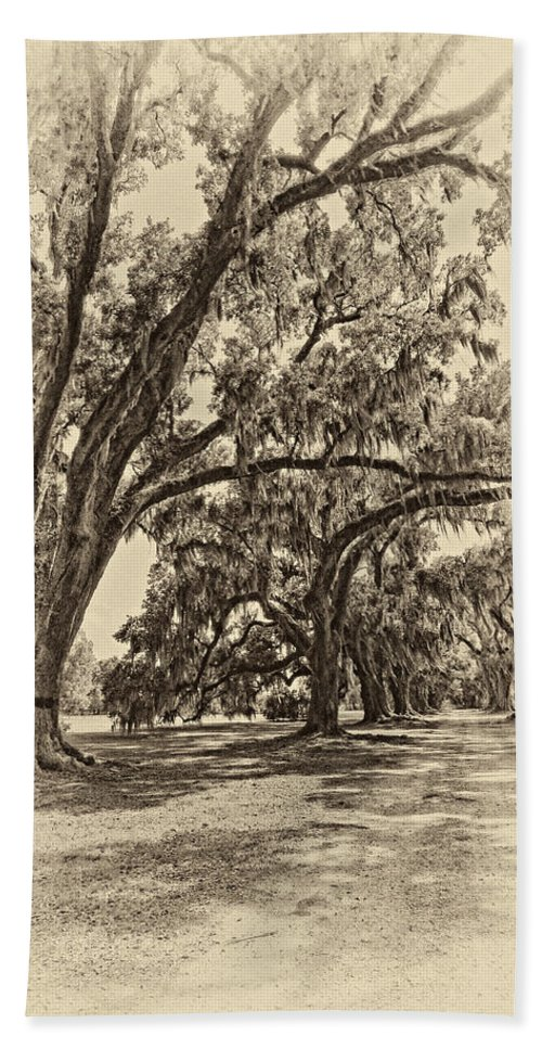 Evergreen Plantation Beach Towel featuring the photograph Back To The Future Antique Sepia by Steve Harrington