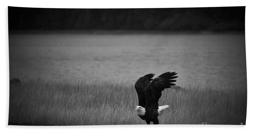 Alaska Beach Towel featuring the photograph Bald Eagle Take Off Series 3 Of 8 by Darcy Michaelchuk