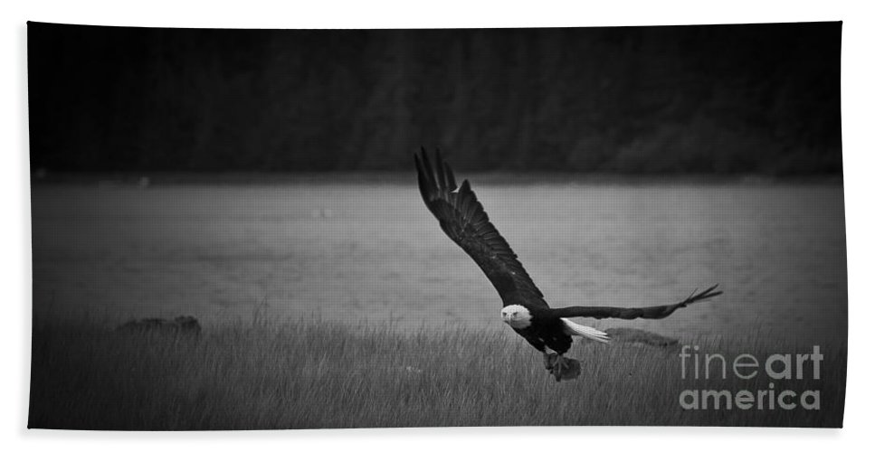 Alaska Beach Towel featuring the photograph Bald Eagle Take Off Series 5 Of 8 by Darcy Michaelchuk