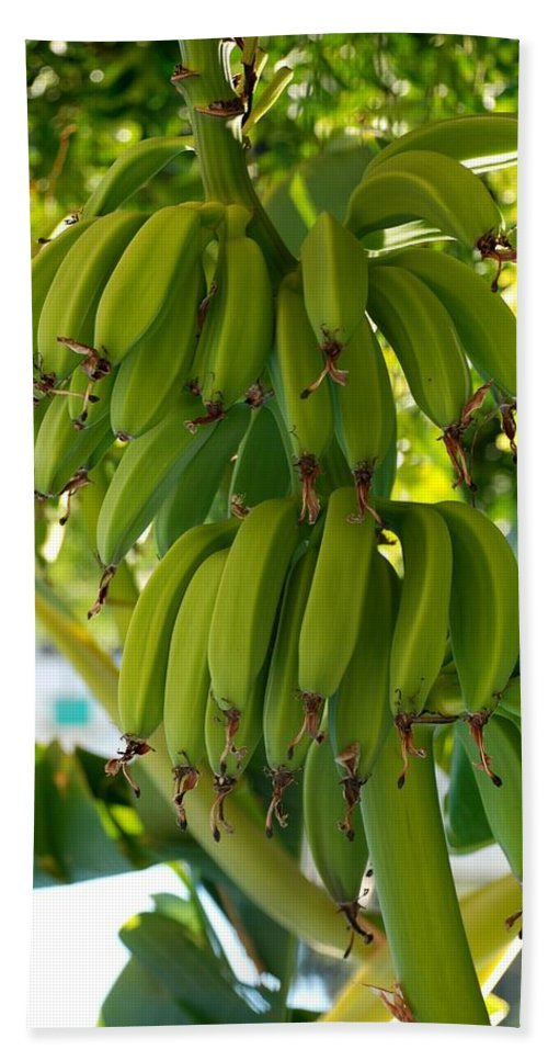 Bananas Beach Towel featuring the photograph Bananas by Dany Lison