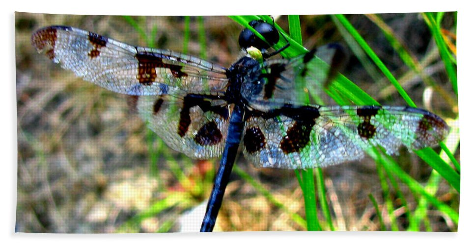 Insect Beach Towel featuring the photograph Banded Pennant Dragonfly by Donna Brown