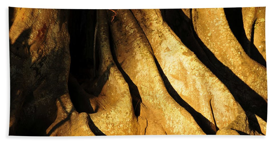 Fine Art Photography Beach Towel featuring the photograph Banyonland by David Lee Thompson