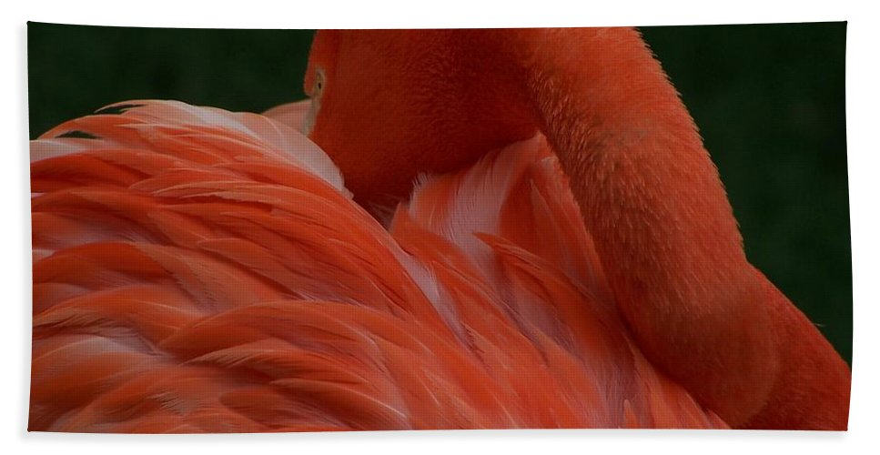 Flamingo Beach Towel featuring the photograph Bashful Elegance by Christy Leigh