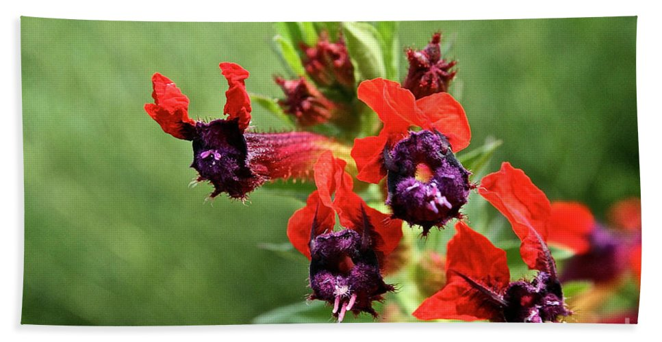 Plant Beach Towel featuring the photograph Bat Face Cuphea by Susan Herber