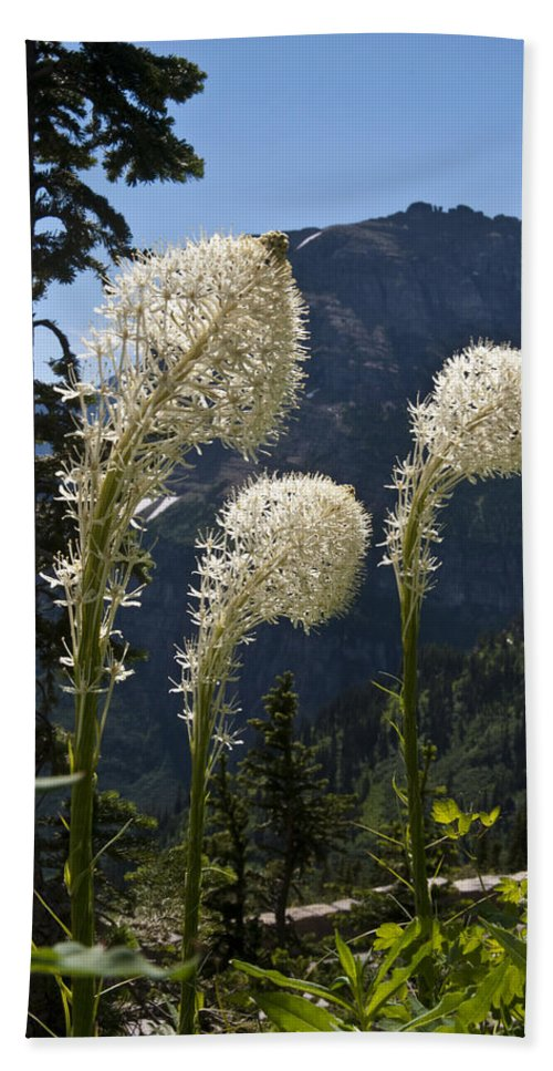 Beargrass Beach Towel featuring the photograph Beargrass Squaw Grass - 4 by Paul Cannon