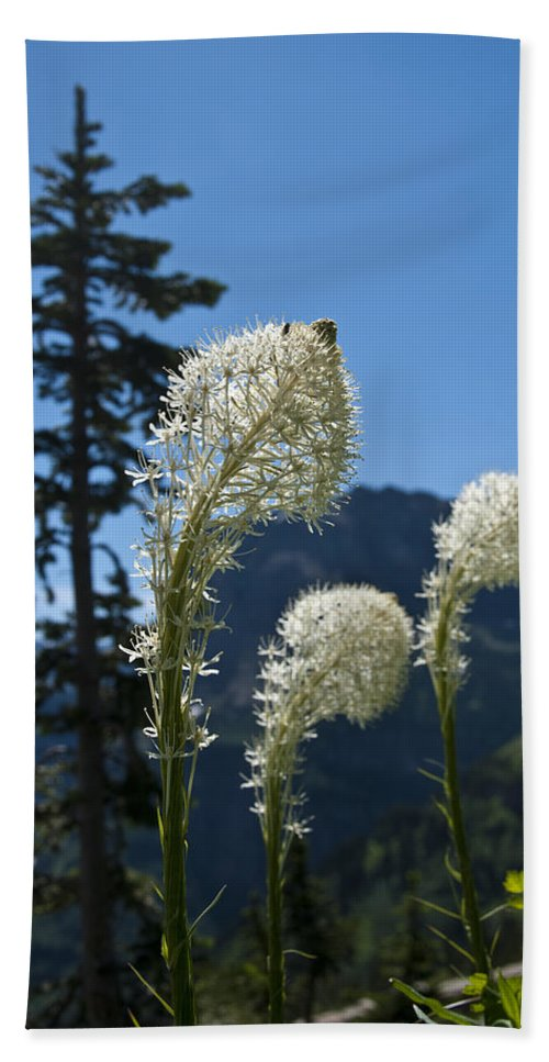 Beargrass Beach Towel featuring the photograph Beargrass Squaw Grass 2 by Paul Cannon