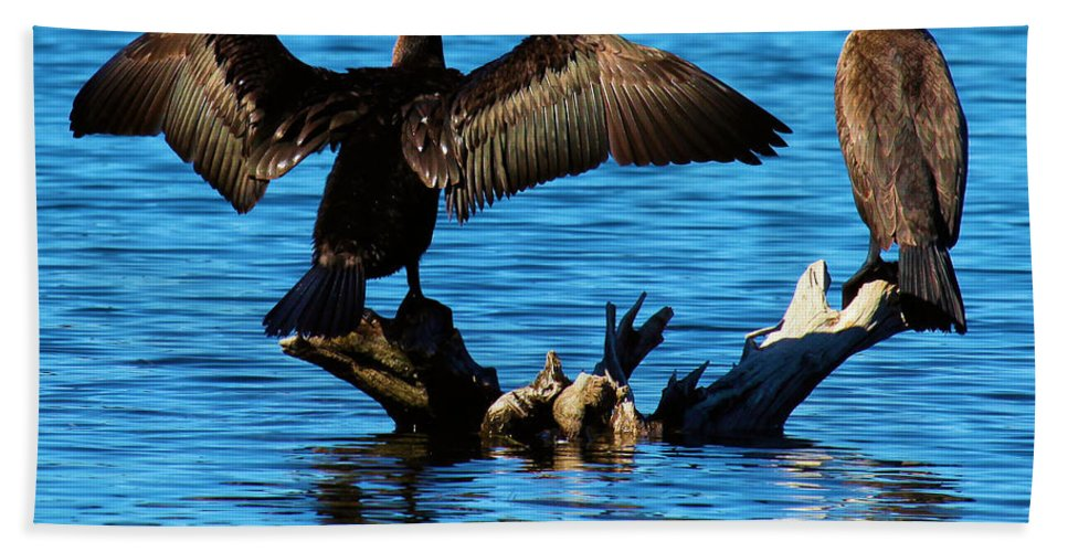 Cormorants Beach Towel featuring the photograph Beautiful Day by Adam Jewell