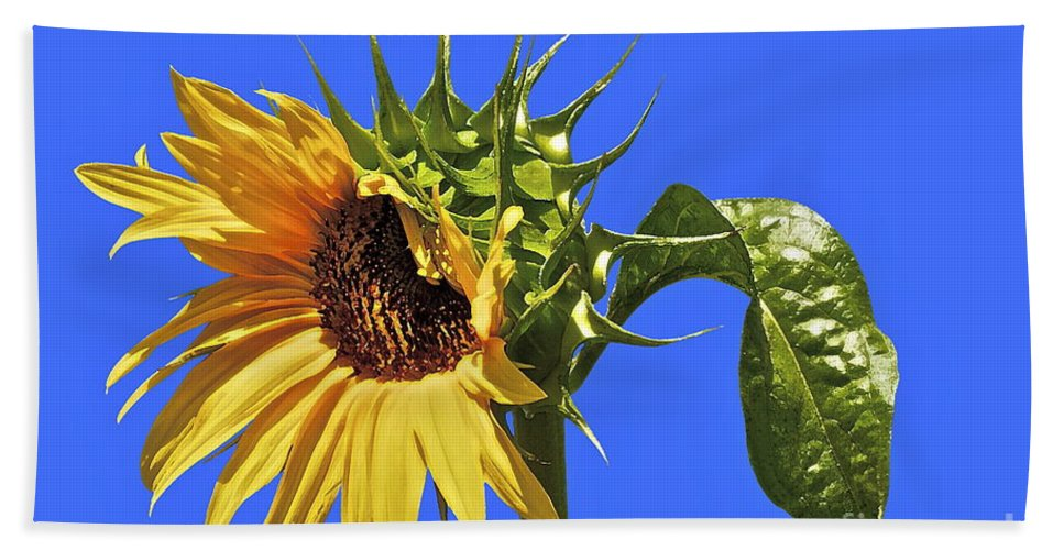Sunflower Beach Towel featuring the photograph Beautiful Moves In Curves by Gwyn Newcombe