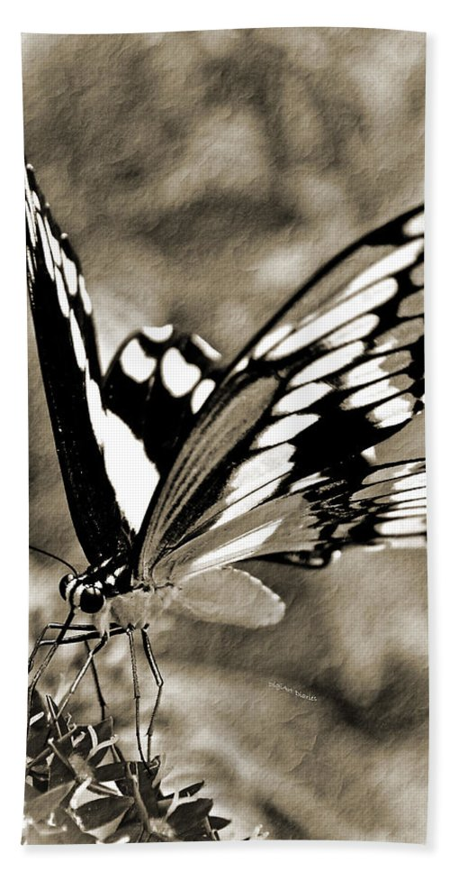 Butterfly Beach Towel featuring the photograph Beauty Simplified by DigiArt Diaries by Vicky B Fuller