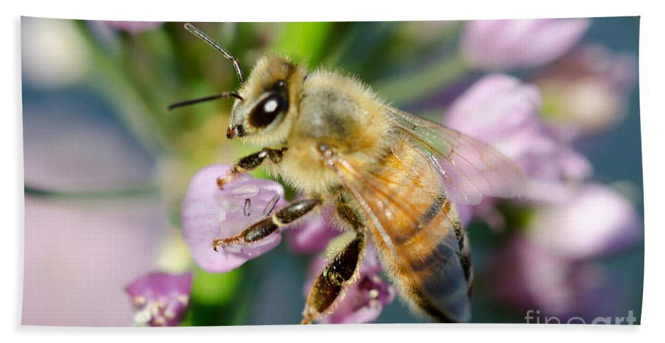 Bee Beach Towel featuring the photograph Bee On A Flower by Mats Silvan