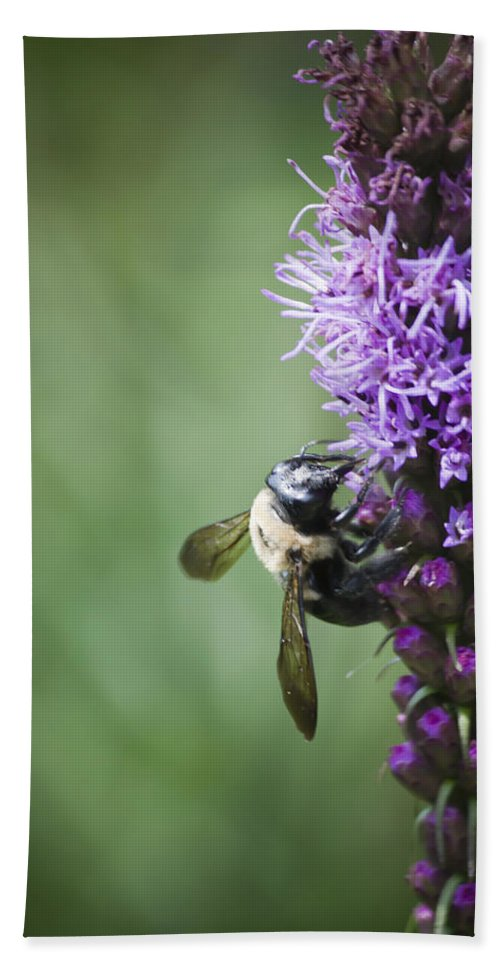 Gayfeather Beach Towel featuring the photograph Bee On Gayfeather by Teresa Mucha