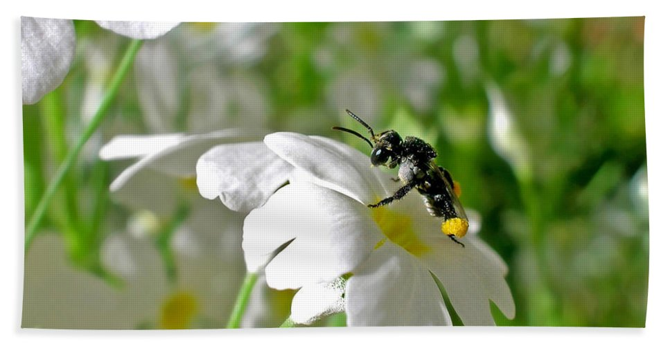 Photography Beach Towel featuring the photograph Bee On Primrose by Kaye Menner