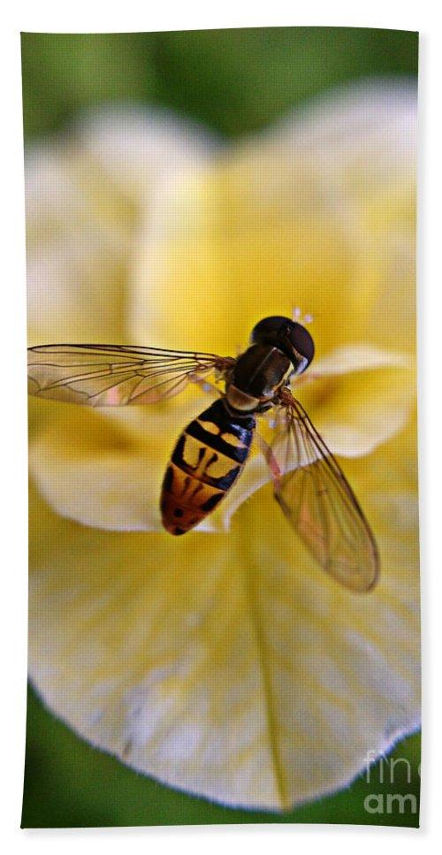 Bee Beach Towel featuring the photograph Bee On Yellow Flower by Matt Zerbe