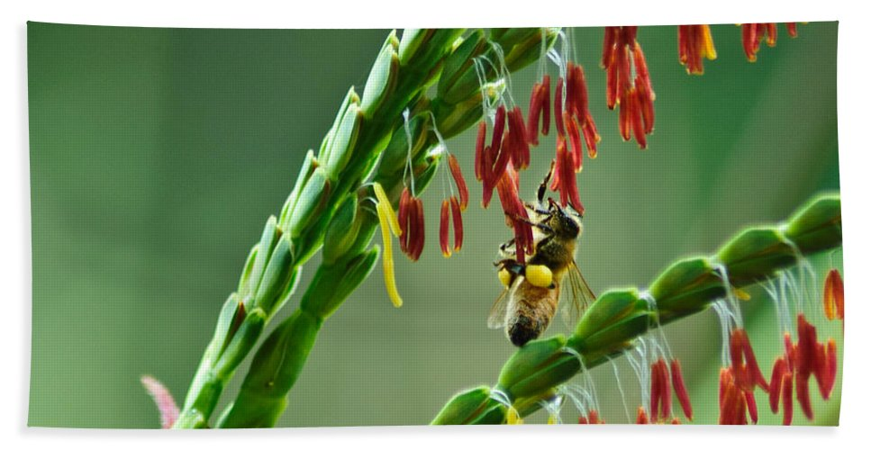 Bee Beach Towel featuring the photograph Bee Time by Carolyn Marshall