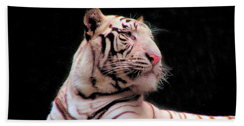 Bengal Beach Towel featuring the photograph Bengal Tiger by Art Dingo