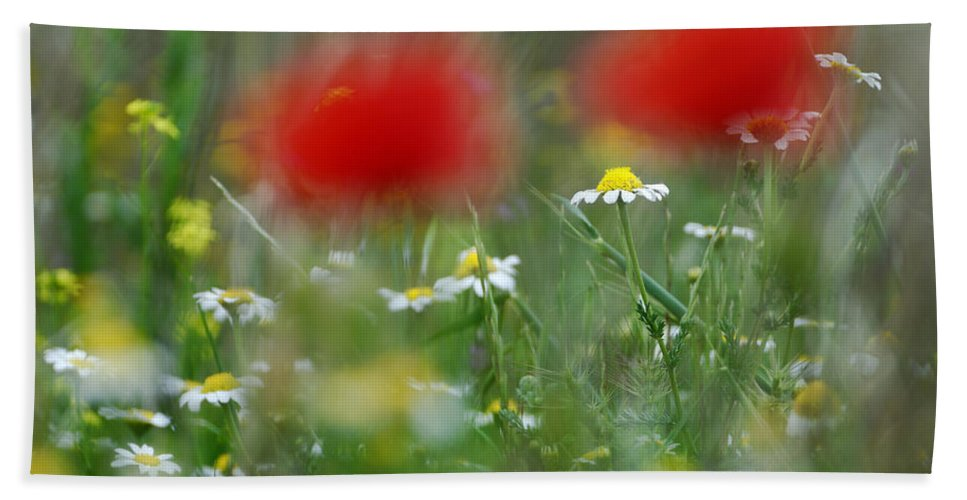 Poppy Beach Towel featuring the photograph Between Red by Guido Montanes Castillo