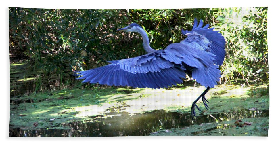Big Beach Towel featuring the photograph Big Blue In Flight by Diana Haronis