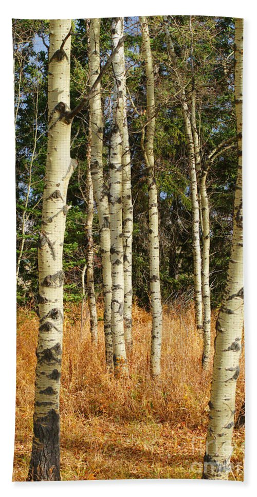 Trees Beach Towel featuring the photograph Birch Tree Abstract by Randy Harris