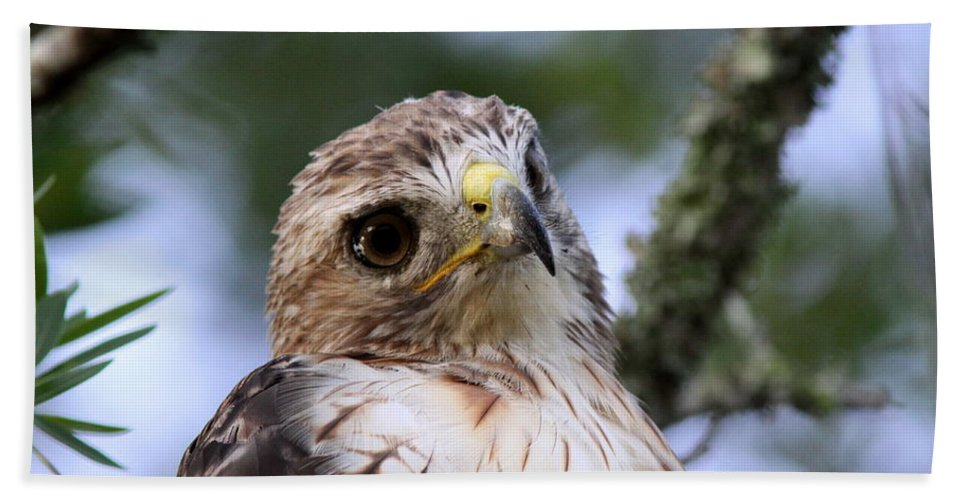 Bird Beach Towel featuring the photograph Bird - Red-tailed Hawk - Bashful by Travis Truelove