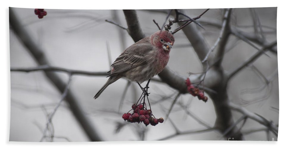 Bird Beach Towel featuring the photograph Bird And Berry 3 by David Arment