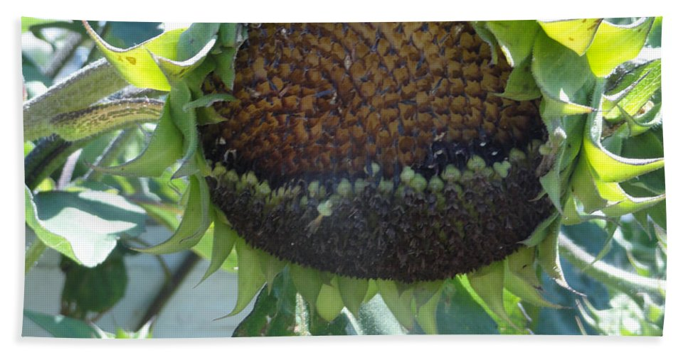 Sunflower Beach Towel featuring the photograph Bird Seed by Shannon Grissom