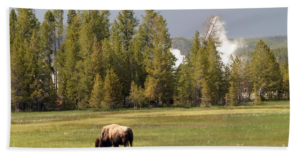 Bison Beach Towel featuring the photograph Bison In Yellowstone by Living Color Photography Lorraine Lynch