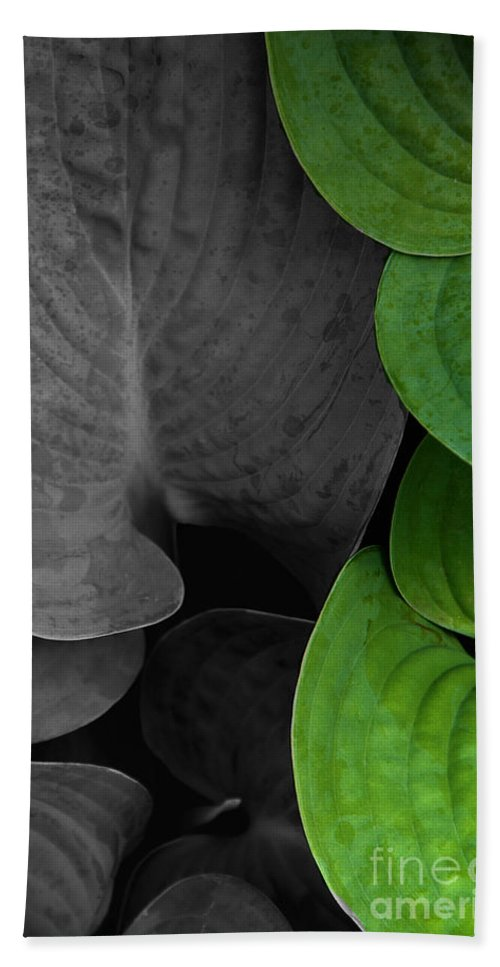 Black And White Beach Towel featuring the photograph Black And White And Green Leaves by Mike Nellums