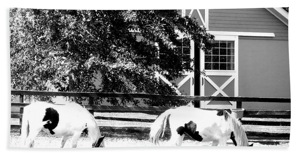 Horses Beach Towel featuring the photograph Black And White Clydesdale Grazing by Kimberly Perry