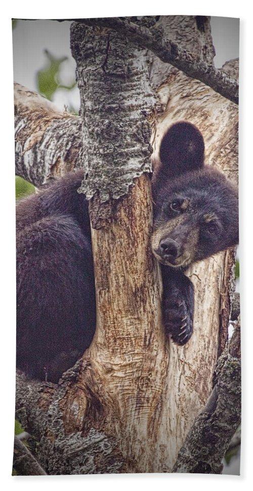 Art Beach Towel featuring the photograph Black Bear Cub No 3224 by Randall Nyhof