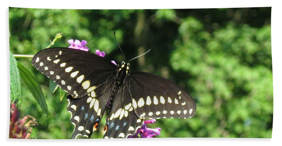 Black Swallowtail Butterfly Beach Towel featuring the photograph Black Beauty by Nancy Patterson