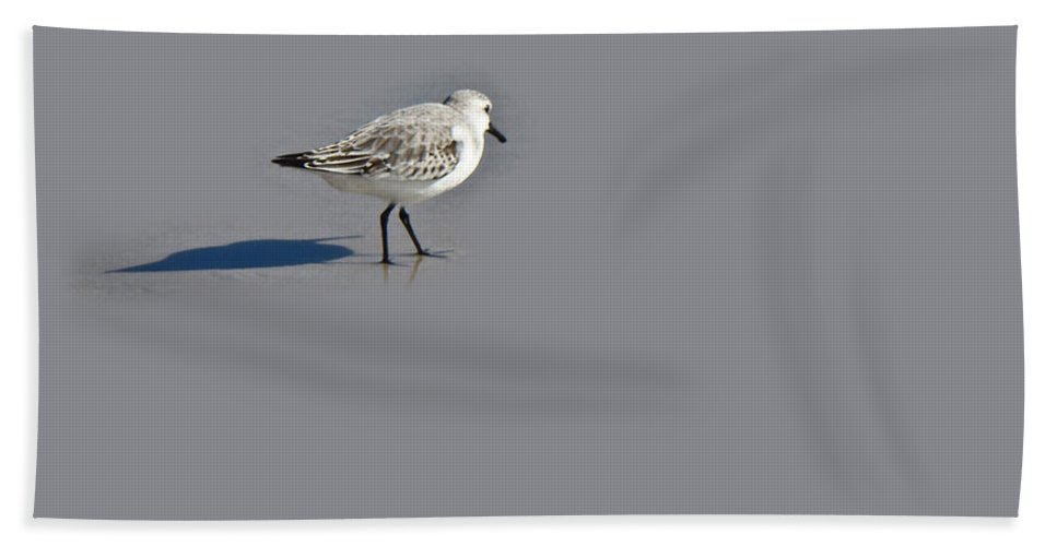Plover Beach Towel featuring the photograph Black-bellied Plover - Pluvialis Squatarola by Mother Nature