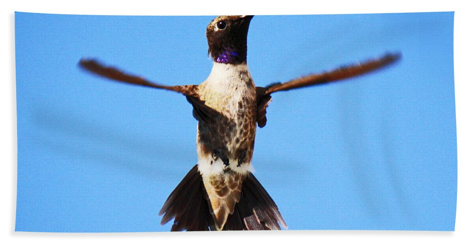 Roena King Beach Towel featuring the photograph Black-chinned Hummingbird Flying by Roena King