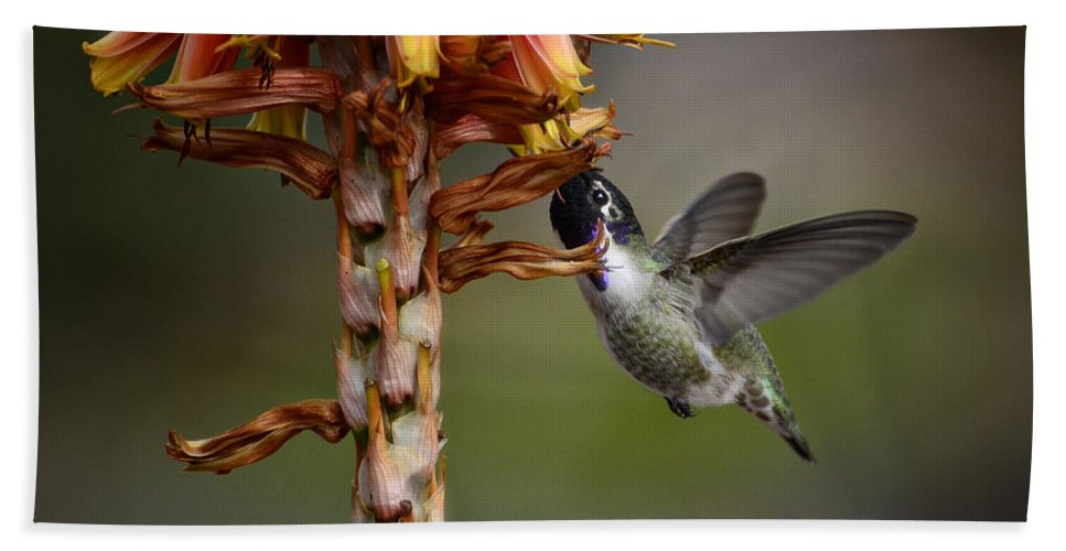 Black Chinned Hummingbird Beach Towel featuring the photograph Black Chinned Hummingbird by Saija Lehtonen
