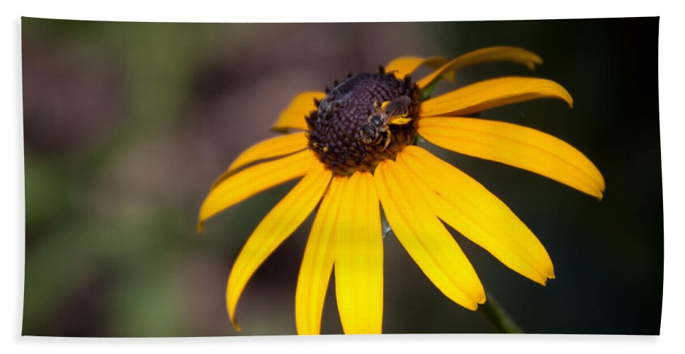 Flora Beach Towel featuring the photograph Black Eyed Susan With Young Bee by Lynne Jenkins