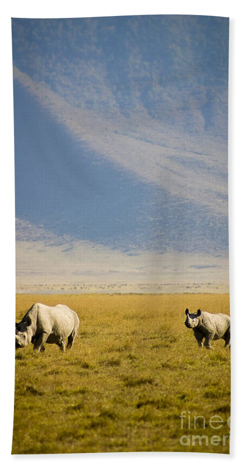 Africa Beach Towel featuring the photograph Black Rhinos Walking Across The Crater by Darcy Michaelchuk