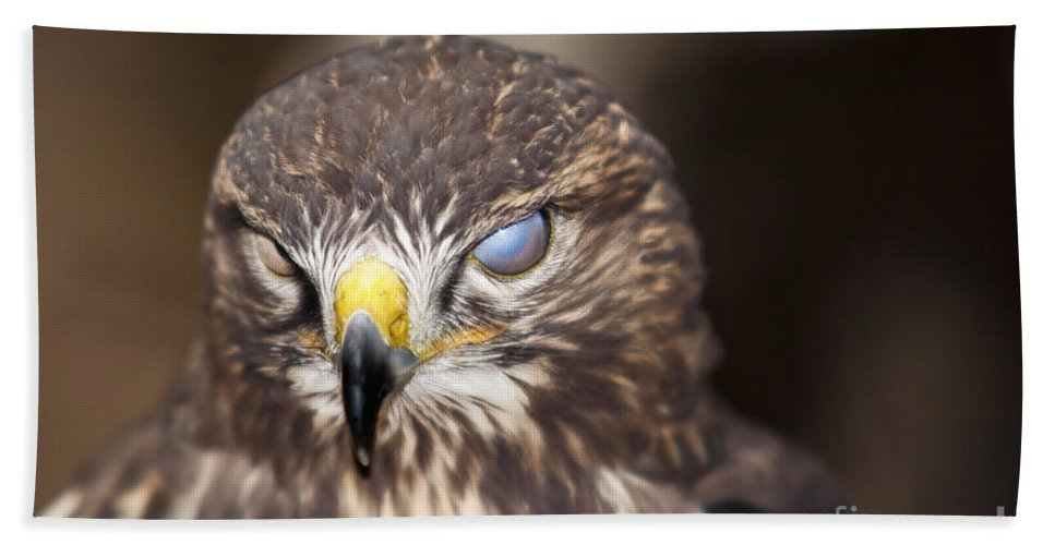 Buzzard Beach Towel featuring the photograph Blind Buzzard by Michal Boubin