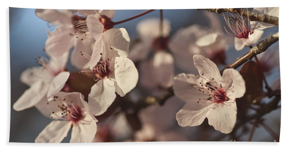 Blossom Beach Towel featuring the photograph Blossoms by Jim And Emily Bush