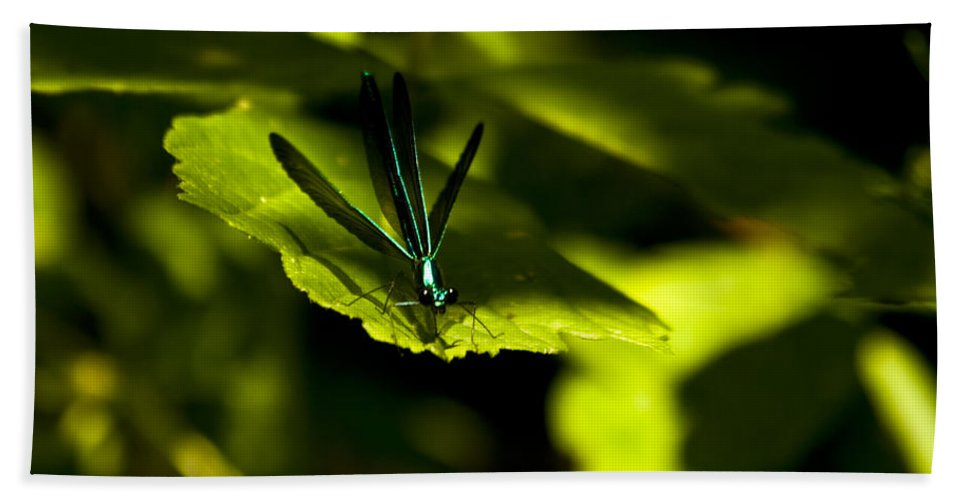 Dragonfly Photographs Beach Towel featuring the photograph Blue Bedazzle by Crystal Heitzman Renskers