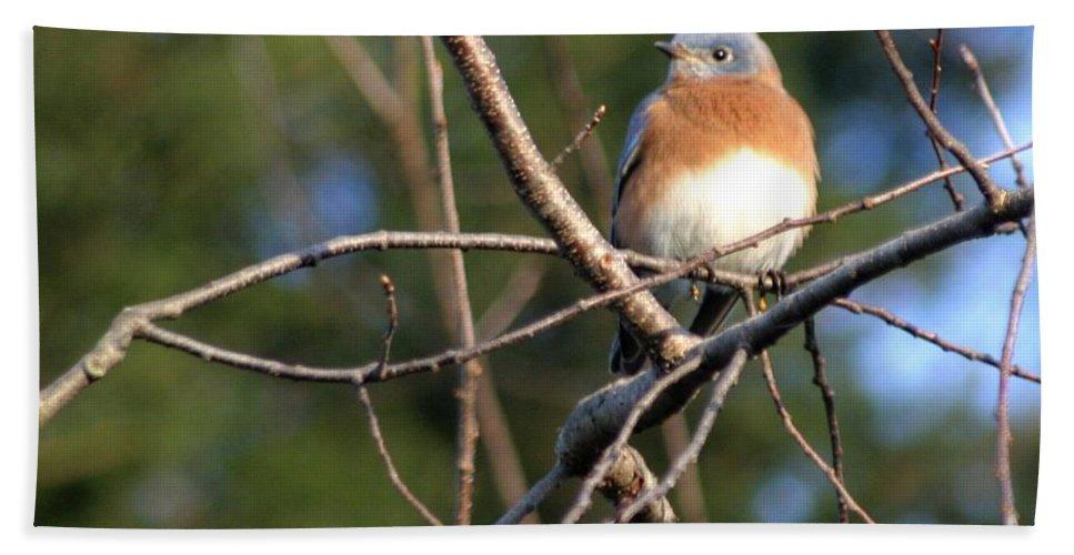 Bird Beach Towel featuring the photograph Blue Bird by Living Color Photography Lorraine Lynch