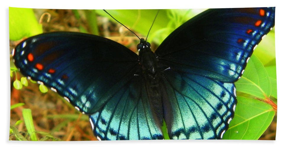 Butterfly. Butterfly Print Beach Towel featuring the photograph Blue Butterfly I by Sheri McLeroy