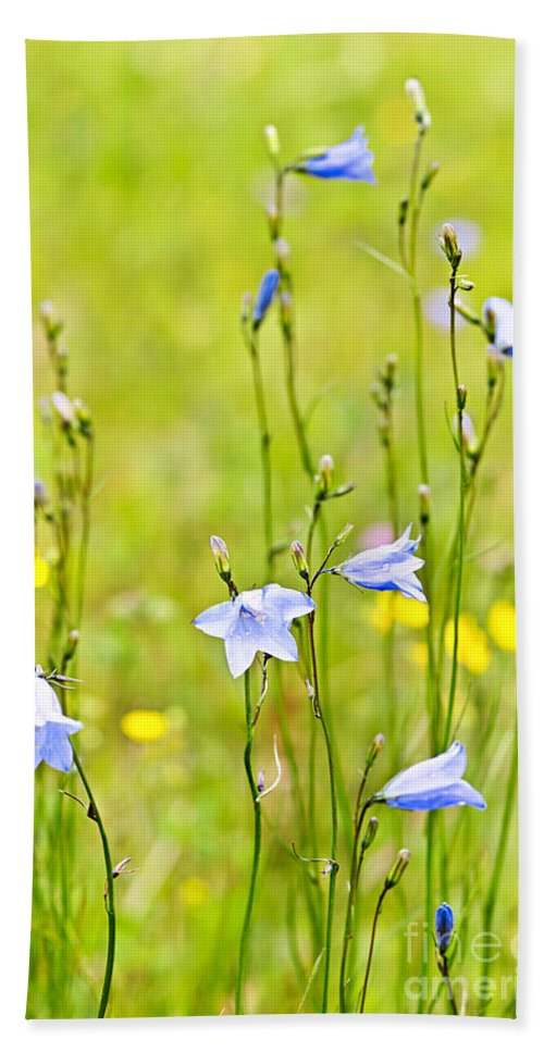 Flowers Beach Towel featuring the photograph Blue Harebells Wildflowers by Elena Elisseeva
