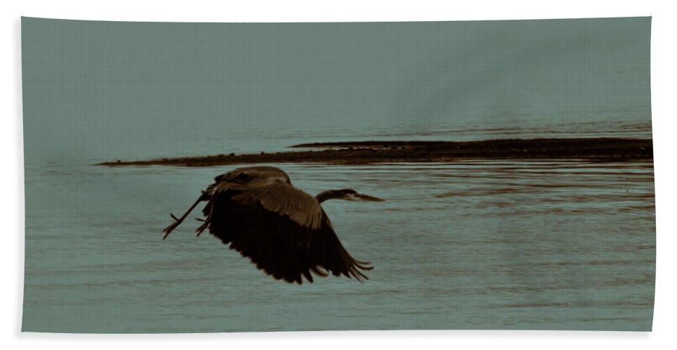 Blue Heron In Flight Beach Towel featuring the photograph Blue Heron In Flight by Douglas Barnard