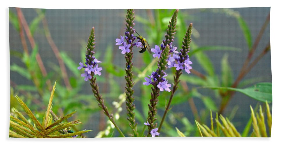 Blue Vervain Beach Towel featuring the photograph Blue Vervain - Verbena Hastata by Mother Nature