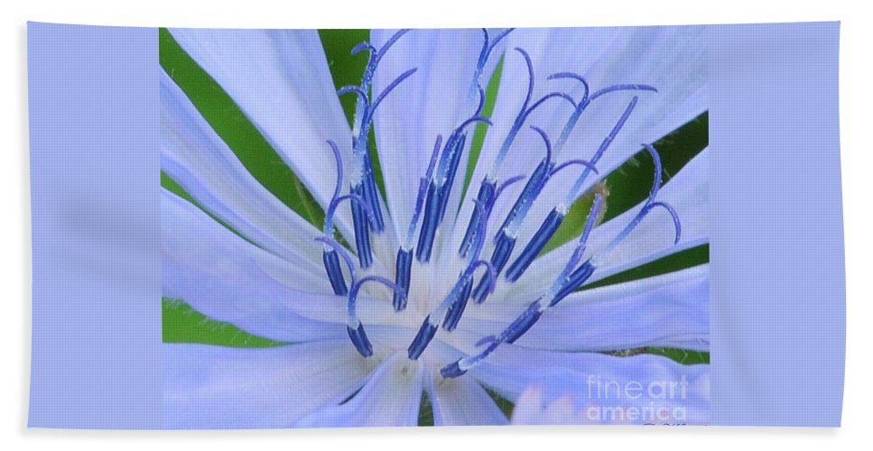 Close Up Beach Towel featuring the photograph Blue Wild Flower by Paul Ward