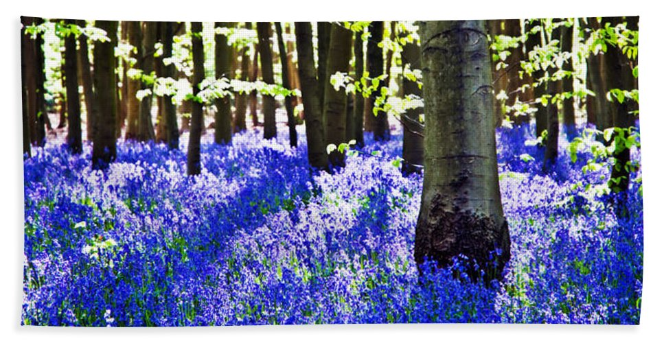 Bluebell Beach Towel featuring the photograph Bluebell Woods by Beth Riser