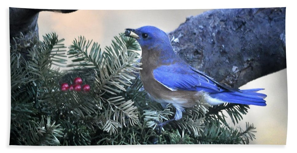 Nature Beach Towel featuring the photograph Bluebird Christmas Wreath by Nava Thompson