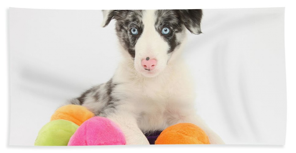 Dog Beach Towel featuring the photograph Border Collie Pup by Mark Taylor