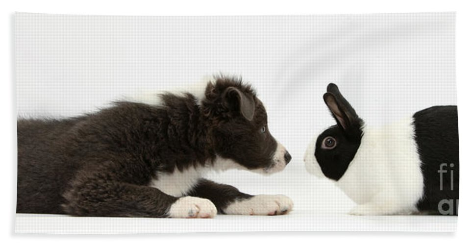 Nature Beach Towel featuring the photograph Border Collie Puppy And Rabbit by Mark Taylor